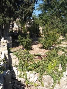 Bakı şəhəri, Binəqədi rayonu, Binəqədi qəsəbəsində torpaq satılır (Elan: 158165)
