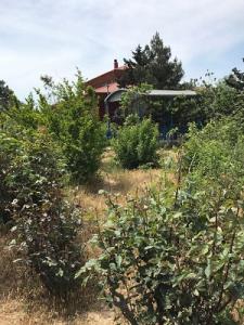 Bakı şəhəri, Sabunçu rayonu, Bilgəh qəsəbəsində torpaq satılır (Elan: 106441)