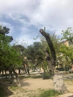 Bakı şəhəri, Yasamal rayonunda, 3 otaqlı köhnə tikili kirayə verilir (Elan: 180612)