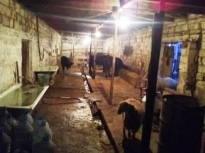 Bakı şəhəri, Abşeron rayonu, Novxanı qəsəbəsində obyekt satılır (Elan: 146712)
