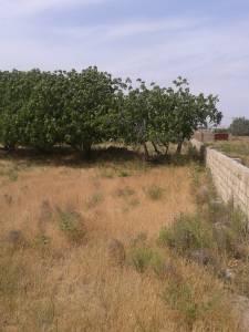 Bakı şəhərində torpaq satılır (Elan: 157978)