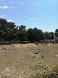 Bakı şəhəri, Xəzər rayonu, Mərdəkan qəsəbəsində torpaq satılır (Elan: 138011)