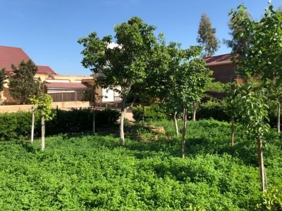 Bakı şəhəri, Xəzər rayonu, Mərdəkan qəsəbəsində bağ satılır (Elan: 109793)