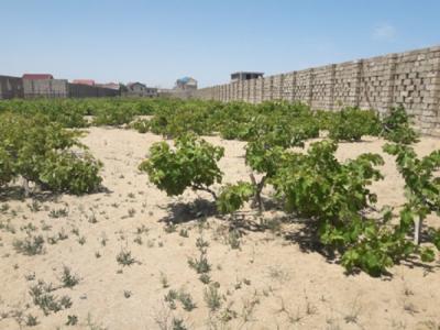 Bakı şəhəri, Xəzər rayonu, Mərdəkan qəsəbəsində torpaq satılır (Elan: 109300)