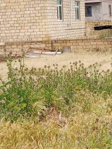 Bakı şəhəri, Abşeron rayonu, Mehdiabad qəsəbəsində torpaq satılır (Elan: 139692)